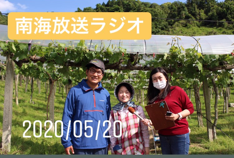 西条市でぶどう狩り戸田果樹園のホームページ